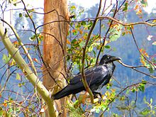 black bird in a tree