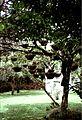 Costa Rica Cartago Lankester Garden 081999 - panoramio.jpg