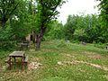 Costigiola-radura roverelle-3.jpg