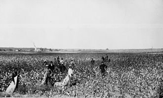 Textile manufacturing by pre-industrial methods - Picking cotton in Oklahoma, USA, in the 1890s