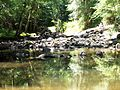 Crabtree Creek Umstead SP NC 5715 (4780643288) (2).jpg