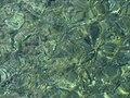 Croatia P8175681 (3953710987).jpg