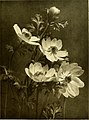 Cyclopedia of American horticulture, comprising suggestions for cultivation of horticultural plants, descriptions of the species of fruits, vegetables, flowers and ornamental plants sold in the United (14780082464).jpg