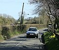 Daffodils at Stock Hill, Highbury - geograph.org.uk - 1217191.jpg