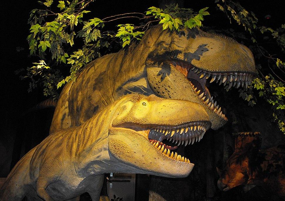 Daspletosaurus torosus models