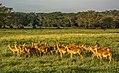 Deer-2group.jpg