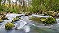 """Der verschleierte Fluß Düssel im Naturschutzgebiet Neandertal im Kreis Mettmann (NRW) 51°13'15.3""""N 6°59'35.7""""E.jpg"""