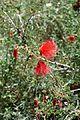 Desert Botanical Gardens 6-7 (23020946526).jpg