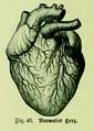 Die Frau als Hausärztin (1911) 046 Normales Herz.png
