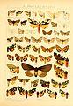 Die Gross-Schmetterlinge der Erde (Taf. 17) BHL9921423.jpg