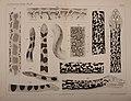 Die Zeichnung der Boiden (Taf. VI) (6810436876).jpg
