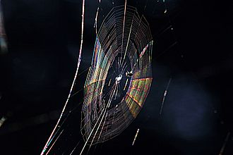 Diffraction - Colors seen in a spider web are partially due to diffraction, according to some analyses.