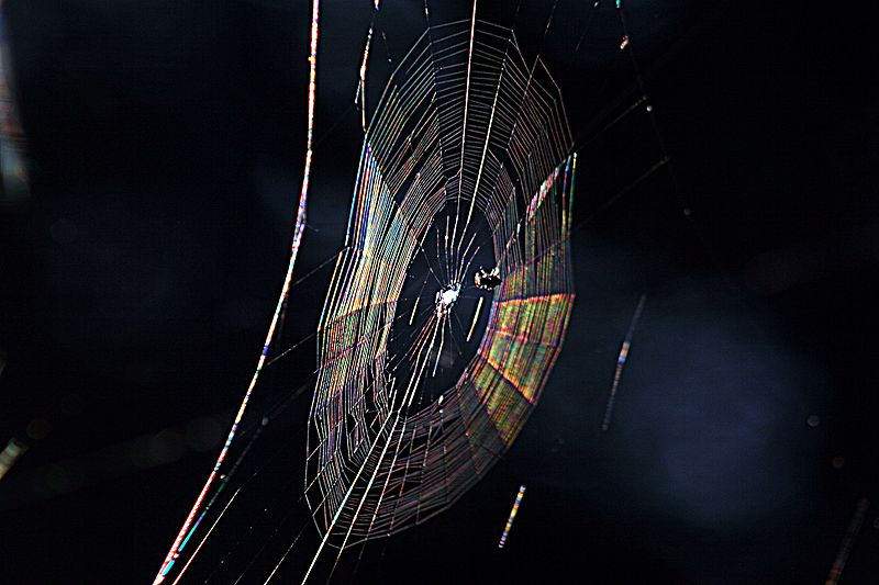 File:Diffraction pattern in spiderweb.JPG