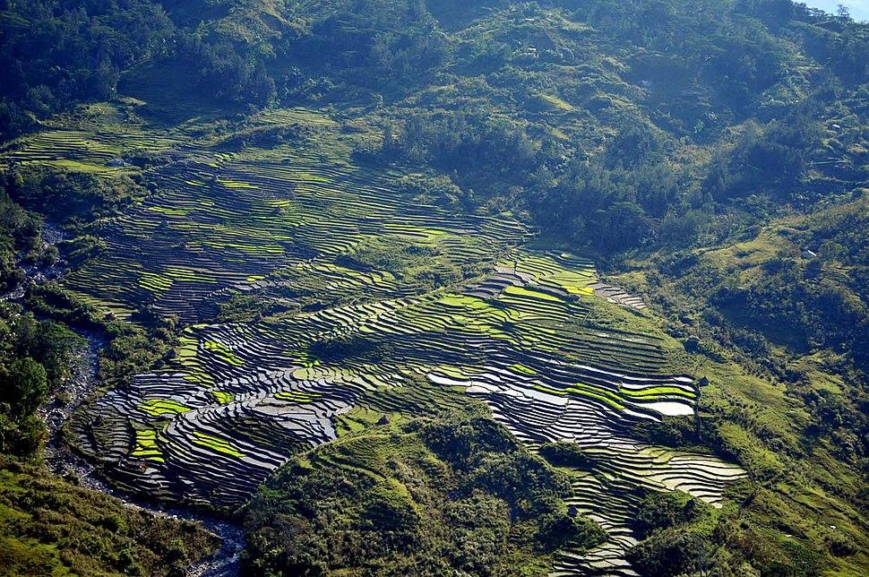 Dili Reisfelder