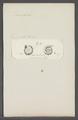 Discorbula ariminensis - - Print - Iconographia Zoologica - Special Collections University of Amsterdam - UBAINV0274 113 04 0020.tif