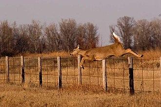 Quivira National Wildlife Refuge - Image: Doe fence 01