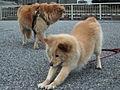 Dogs (102553875).jpg