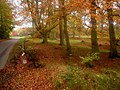 Drum Castle woods in Autumn - geograph.org.uk - 101437.jpg
