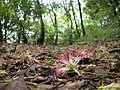 Dscn0929 japan nature.jpg