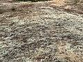 Dunes Charmes Sermoyer 39.jpg