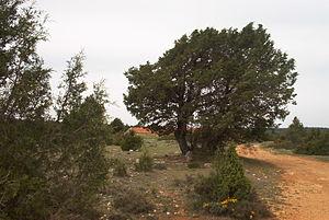 Sierra de Solorio - Image: EL SABINAR