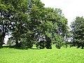 East End Park trees 13 August 2017.jpg