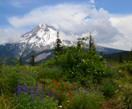East Zigzag Mountain and Wildflowers, Mt Hood National Forest (23346653932).png