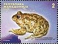 Eastern Spadefoot (Pelobates syriacus balcanicus).jpg