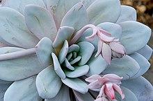 best soil for succulents in pots