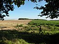 Edge of beet field (framed in foliage) - geograph.org.uk - 999746.jpg