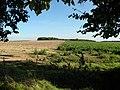 Edge of beet field (framed in foliage) - geograph.org.uk - 999746.jpg
