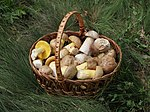 Edible fungi in basket 2012 G1.jpg