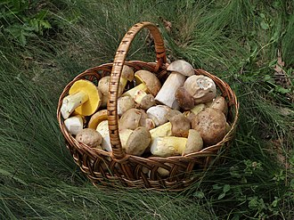 Mushroom hunting - A basket of edible mushrooms from Ukraine