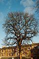 Edinburgh tree (16422304355).jpg