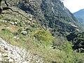 El Refugio 2 - panoramio.jpg