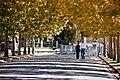 El otoño llegó (5041438266).jpg