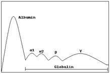 Serum protein electrophoresis - Wikipedia