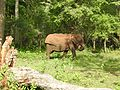 Elephant at its lunch time.jpg