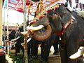 Elephants for Vaishaki Vishu festival parade kanda kerala.jpg