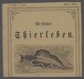 Elysia viridis - - Print - Iconographia Zoologica - Special Collections University of Amsterdam - UBAINV0274 080 13 0002.tif