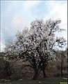Enunciation of spring نوید بهار - panoramio.jpg