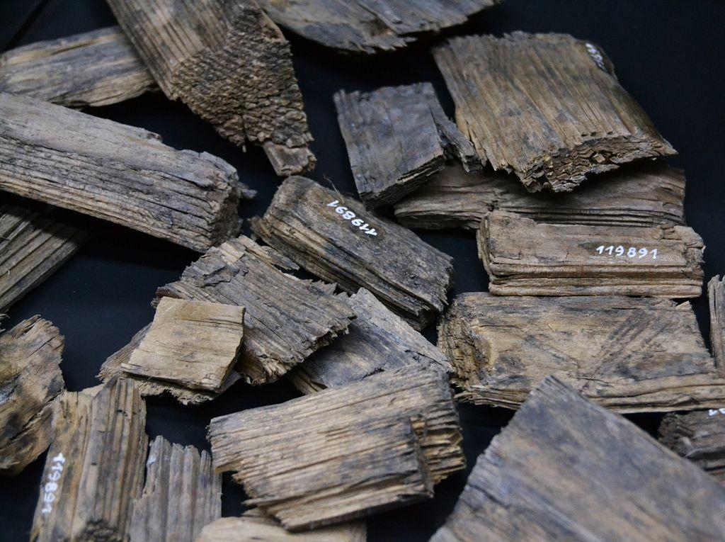 file excresc ncia de la fusta en el tronc d 39 un arbre. Black Bedroom Furniture Sets. Home Design Ideas