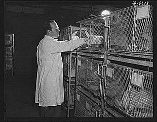 Cuniculture - Wikipedia