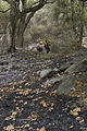 FEMA - 33486 - Bureau of Indian Affairs Firefighters working in California.jpg