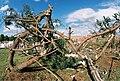 FEMA - 5124 - Photograph by Jocelyn Augustino taken on 09-25-2001 in Maryland.jpg