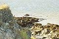 Falaises à marée montante (Hillion).jpg