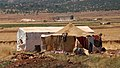 Farm worker accommodation Lebanon.jpg
