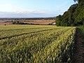 Farmland, Woodcote - geograph.org.uk - 1595605.jpg