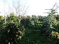 Faros avlidos - panoramio.jpg