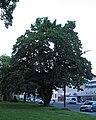 Feldahorn Friedrichgasse 41 Graz 01.jpg
